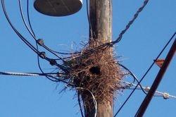Parrot's Nest Whole