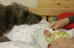 Ludvig og frokost i pasientseng