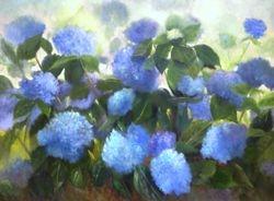 My Blue Hydrangea