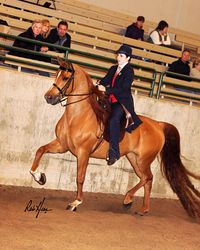 Holly Rydman showing EA Miss Debutante