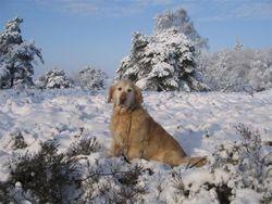 Pippin in sneeuw renderklippen