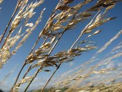 hillside grass