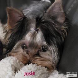 """""""Josie"""""""