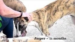 Jasper at play date 18 November 2018