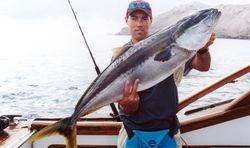 Toby King fish NZ