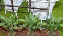 Garden fern New for 2013