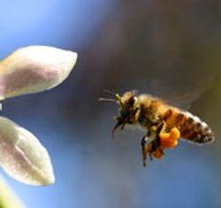 Pollen carrier