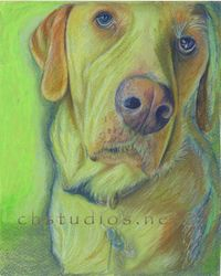 d'Artagnan Dog Pet Portrait