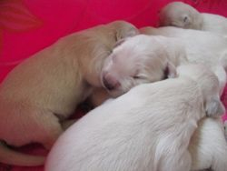 Snuggly Babies - 5 Days old!!