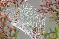 Teia de aranha com orvalho