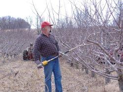 Karl Pruning apple Trees