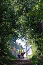 les formidables chemins dans les bois