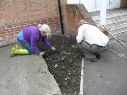 second planting