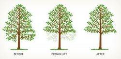 Crown Lift
