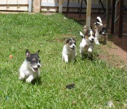 Pups!