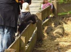 Rania schaut sich die Schweinchen ganz genau an