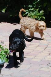 Poochy & Bess