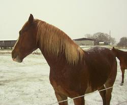 Nico's 1st Snow! Feb. 2015