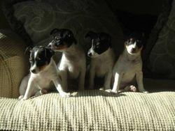 The Dec 2004 Gang