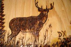 Deer Detail