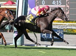 Avenge wins the Rodeo Drive Stakes