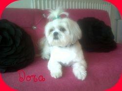Dora after her trim