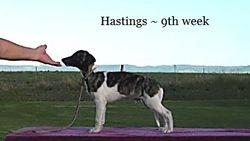 Hastings is spoken for