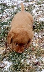Xavier 7 weeks enjoying the frosty ground