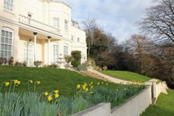 Daffodils at Rowden House