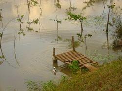 Lago con muelle