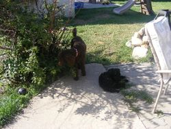 Juno and Sampson