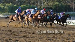 Lined Up in the Santa Anita Handicap