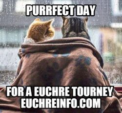 Purrfect day for a Euchre tourney.