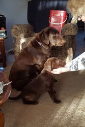 Maggie with Rusty