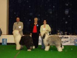 Best Puppy Dog and Reserve Best Puppy Dog
