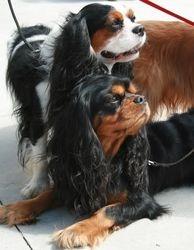 Bobesh & Monty