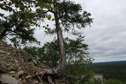 Tree on Mount Cheminis