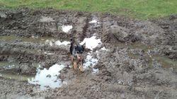 Muddy path to cross
