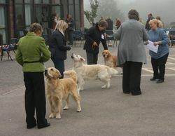 Post Graduate Dog Line Up