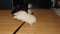 Vicky learning dog agility :)