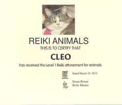 Cleo 'Pudders' the Reiki Cat