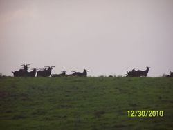 Hawaii Island Racks