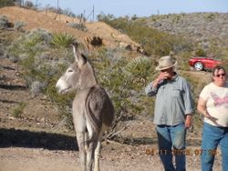 Scott and Anna with a wild burro