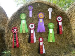 Rosettes on Hay bale