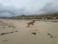 Hund am Strand von Landeda