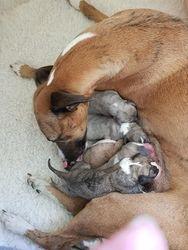 4 male 2 female newborns