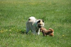 Kozy o Bailey
