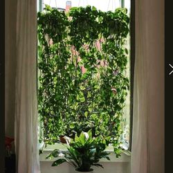 Hanging plants instead of shades or curtains