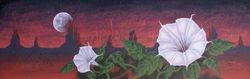 Datura Dream
