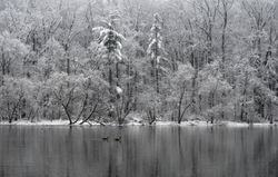 Pine Lake, Late March Snow 4